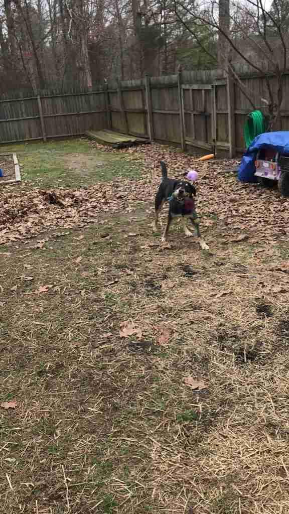 Zeus juega en su nuevo patio trasero