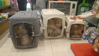 Rescued dogs in transport crates