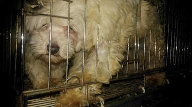 Puppy farm dog in tiny cage