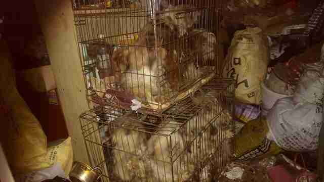 Dogs in tiny cages in puppy mill in South Korea