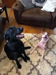 dog rescue proposal iowa