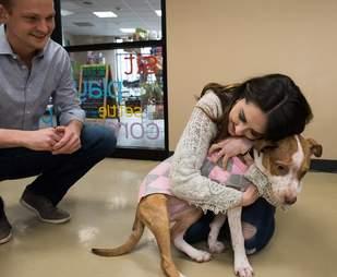 pitbull rescue proposal iowa