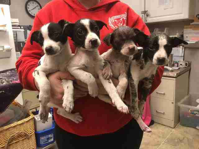 puppies paint rescue kansas city