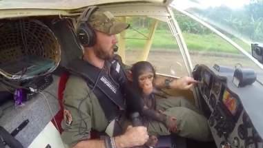 Baby chimp sitting on pilot's lap