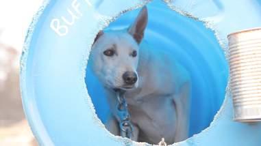 dog sled abuse tours canada