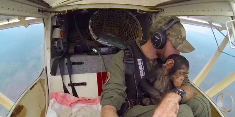 Chimp and pilot looking out of plane window