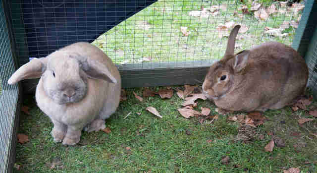 bunny best friends need a home together