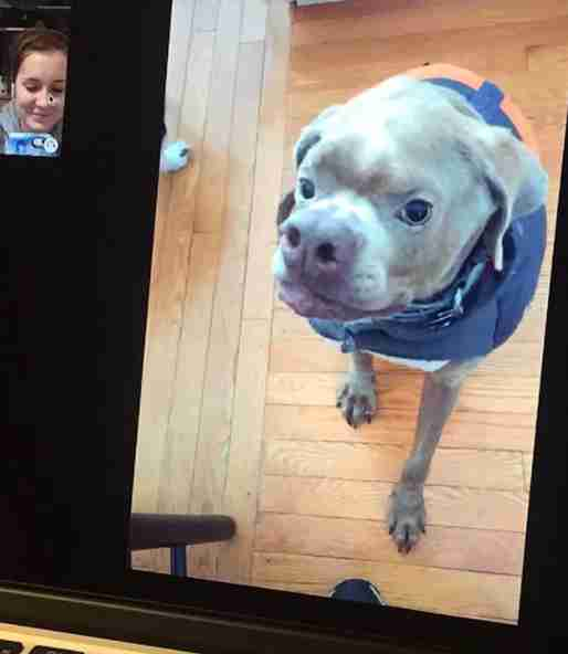 Woman talking to dog through FaceTime