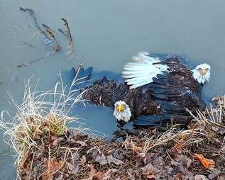 eagle talon stuck pennsylvania river