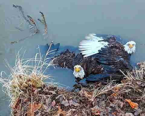 eagle talon stuck pennsylvania river