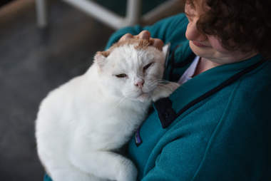 Woman holding cat without ears
