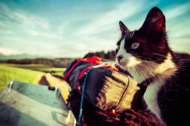 Mogli the stray cat on a motorbike