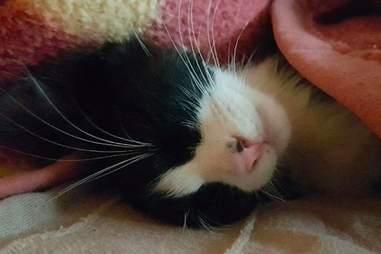 Mogli the cat sleeping