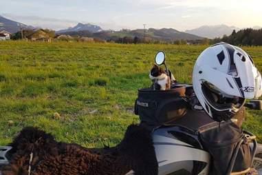 Mogli the adventure cat on the motorbike