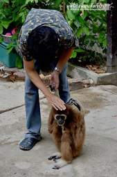 Person holding hand of rescued gibbon