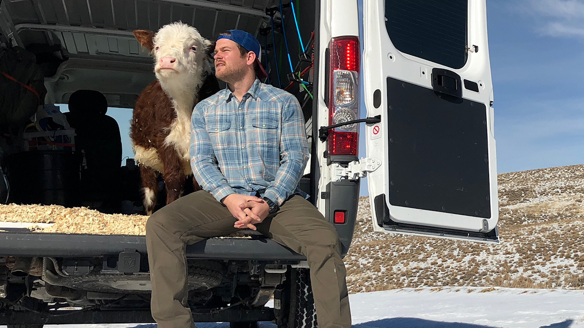 Guy Drives Van Across The U.S. With A Cow