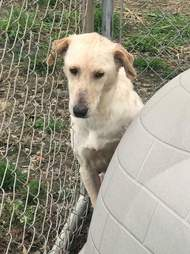 Dog saved from neglect case