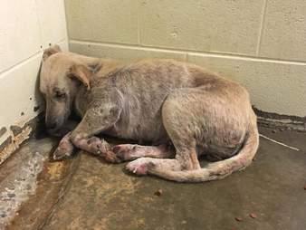 Dog saved in Alabama