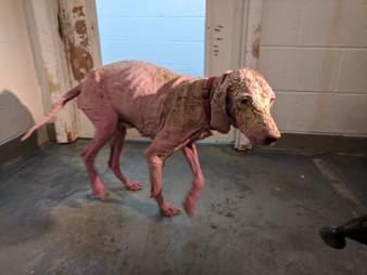 bald dog rescue kelly utah desert