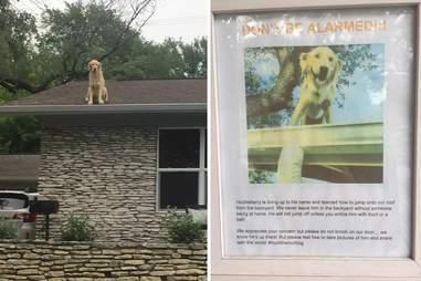 dog roof texas huck