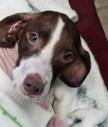 desert dog rescue kelly bald