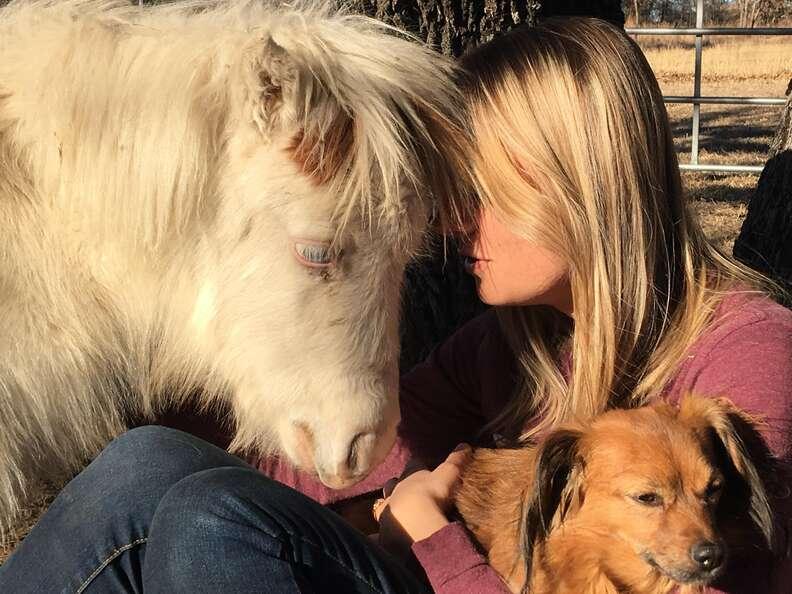 Mini horse snuggling up to rescuer