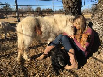 Mini horse snuggling up to rescuer