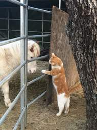 Mini horse saved from slaughter meeting cat