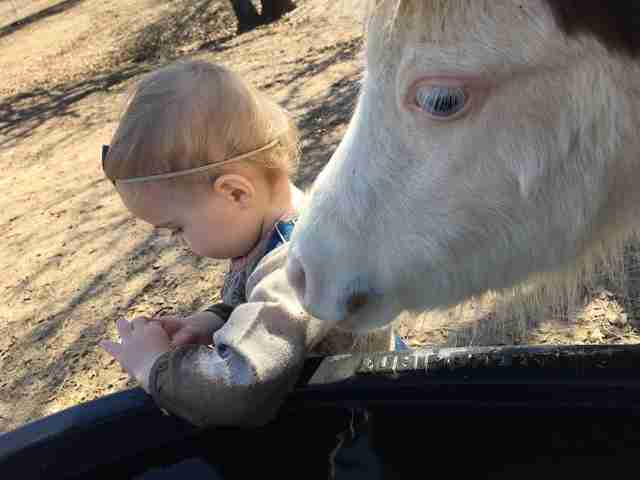 Mini horse snuggling up to toddler
