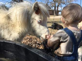 Rescued mini horse meeting toddler