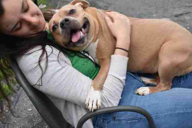 helena pit bull nice returned shelter
