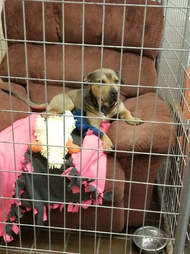 dog chair kennel shelter illinois