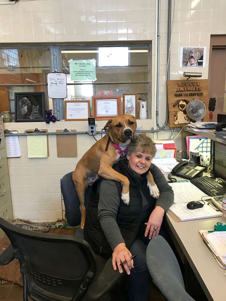 pit bull chair office shelter