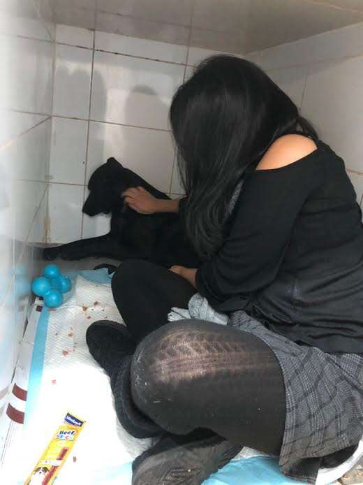 Woman trying to soothe dog in the back of a kennel