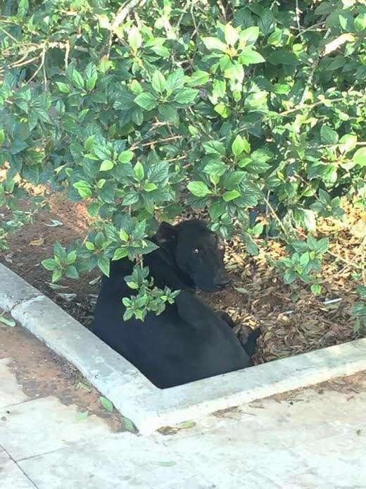 Dog hiding beneath some bushes