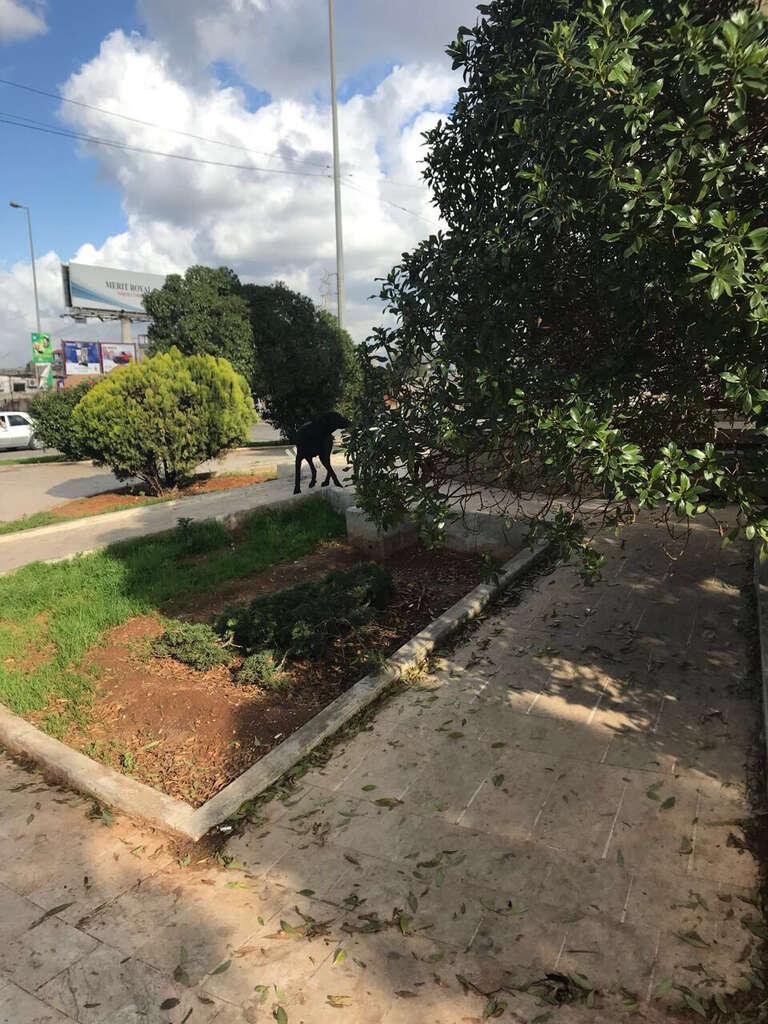 Garden block in Lebanese city