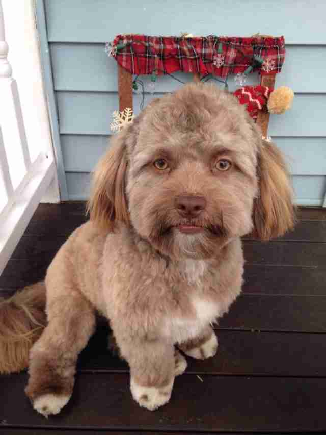 This Dog Looks Like A Human — And It's Making People Uncomfortable