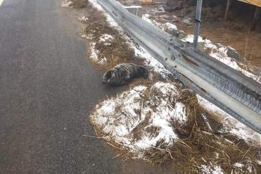 Seal on side of road