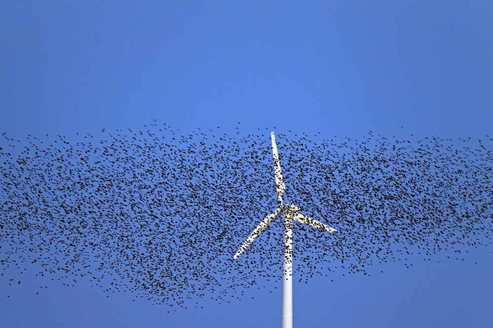 Birds Have Much Bigger Enemies Than Wind Turbines