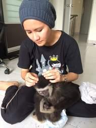 Woman grooming gibbon