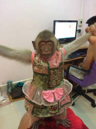 macaque monkey thailand rescue pet
