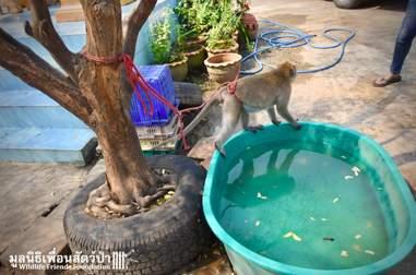 macaque monkey pet rescue