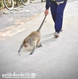 macaque rescue pet