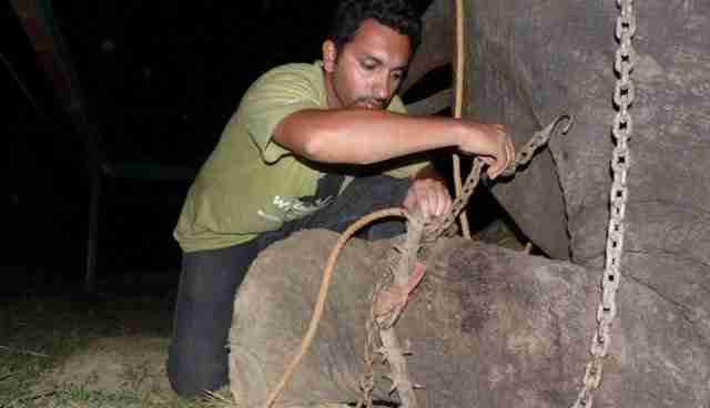 Man cutting chain from elephant's foot