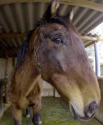 Horse saved from neglect in Spain