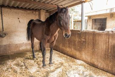 Skeletal mare saved by sanctuary in Spain