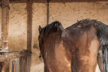 Scared mare after arrival at sanctuary in Spain