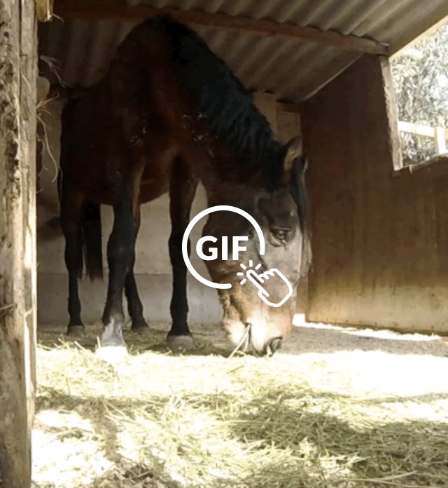 Starving mare finally eating at rescue center in Spain