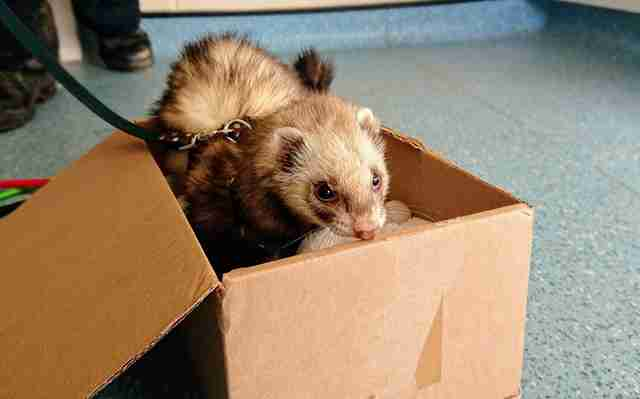 ferret found in bag of teddy bears