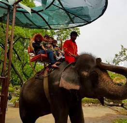 elephant ride cruel thailand